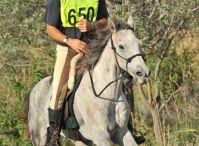 Horse Characteristics / Information about choosing an endurance horse