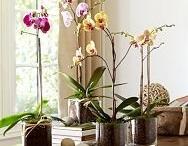 Orchids pots ideas