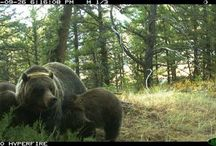 Trail Camera Tips and Myths / Hopefully we can shed a little light on some of the most frequently asked questions, and general issues we see with trail cameras.