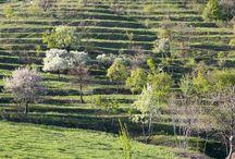 Magyar borászok - Hungarian winemakers / Borászok,akiket megtaláltok az ETAP polcain