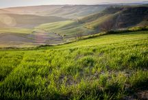 News - Viticoltura / | www.vinoway.com/news-enogastronomiche/categorie/viticoltura.html |  La sezione news di Vinoway è una raccolta ricercata di notizie dal mondo del wine&food e del turismo, selezionate per te.