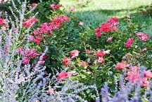 Home - gardens  / by Beth Szostek