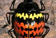 beetle shells