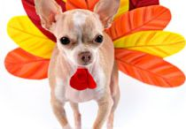 Thanks + Giving / Thanksgiving with our family + friends + pets = Grateful!