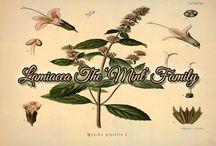 Plant Families