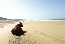 Playas y naturaleza / Playas y naturaleza de la provincia de Cádiz