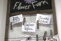 Business - Flowers for Market / by Grace Hensley @ eTilth