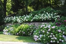 garden / by Jennifer Berg