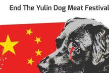 Animal Welfare MATTERS