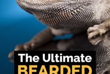 Beardie foods and captivity lighting
