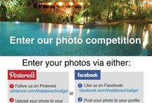 Thala Beach Lodge Pinterest and Facebook Competition / If you're a previous guest (or will be a guest before 31st October) we'd love to see photos from your stay! We're offering 2 nights in a Eucalypt Bungalow (including breakfast) as a prize for the best snap!  Simply like us on Facebook https://www.facebook.com/ThalaBeachLodge or follow us on Pinterest http://pinterest.com/thalabeachlodge/ and upload your favourite pic of Thala and tag us or hashtag #thalabeachlodge to win.  / by Thala Beach Lodge Australia