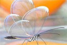 Emma pillangók