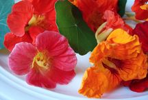Edible Flower Recipes / Flower photography / by Jessica Farber