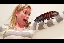 Scary Pranks / Watch and share funny Scary pranks.