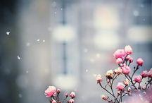 Inspiration: pretty nature