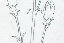 draw carnation