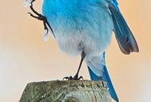 Birds, Birds, and more Birds