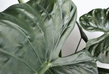 MODERN PLANTS / THE INSPIRATIONAL FUTURISTIC SHAPES OF PLANTS