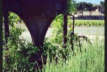 """Autour du domaine de Château Virant / Les """"off"""" de la propriété, ce qu'on peut voir en se promenant dans les jardins du domaine."""