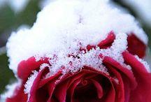 True Winter
