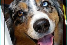 Dog Training Motivation