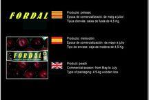 Meritxell Punsola Bosch / Cooperativa de Fruita de Piera