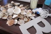 seashell s idea