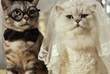 Wedding or Fashion for Animals / Actually, animals have love each other. They can have their own wedding and fashion ways.