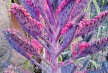 Succulents / Echeveria