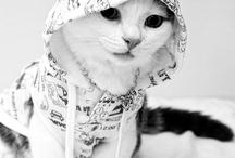 Can I haz a jurzi? {pet's clothes} / Cute clothes for animals <3