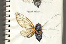 Акварель насекомые