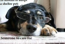 Reasons To Adop A Shelter Pet / by Digger Cartwright