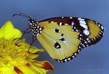 (1) Butterflies & Moths / by Robert Stead