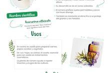 Infografías de Plantas