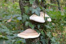 Mijn foto's: In het bos