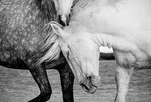 Beautiful Animals / by Yaseer Waj