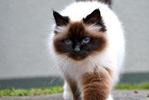♡ cats ♡
