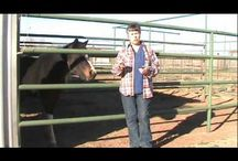 Clicker Training A Horse Videos