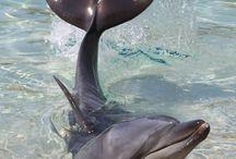 Дельфины_Киты