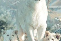 Wild life Animals ;) *