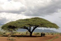 Africa - outside of SA