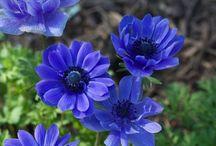 цветы сад