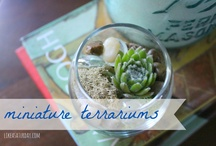 Terarriums and Plants