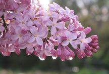 Fleurs du Sud / Entre jardins et  garrigue ensoleillés : à la découverte de fleurs colorées.