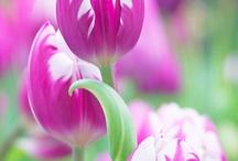 Flor e ar