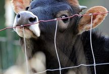 e li chiamano animali!!!!!!!!
