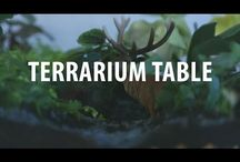 Terrarium table diy