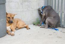 Animals Need Home