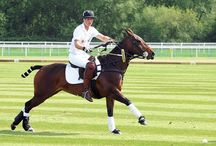Polo / Sport of Kings / by Abler Equine Pharmaceutical