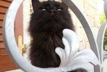 Mimì il mio micioooo!!!! / Gatto